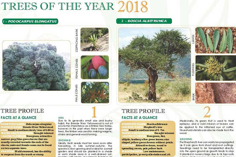 2018 TREES OF THE YEAR