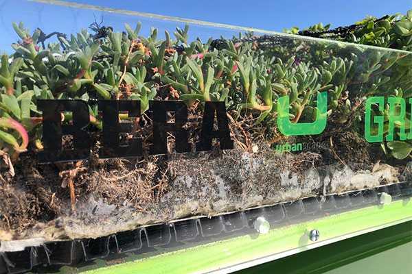 Lighter, better more efficient green roofs