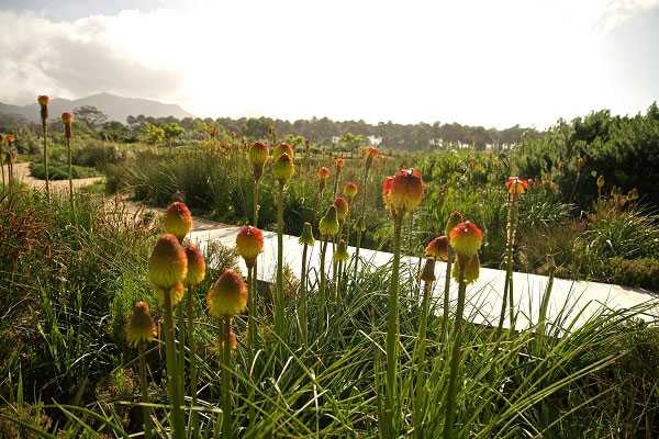 Water wise concepts crucial in landscape design