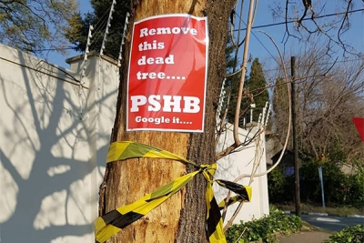 Johannesburg risks losing a third of its trees